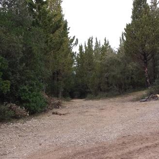 2-il bosco di cipressi