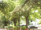I Giardini fuori Porta S. Marco